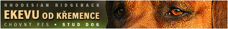 Rhodesian Ridgeback - Ekevu od Křemence - krycí pes